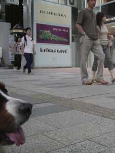 shibuya-blog20040627c.jpg