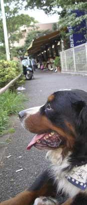 shibuya-blog20040703e.jpg